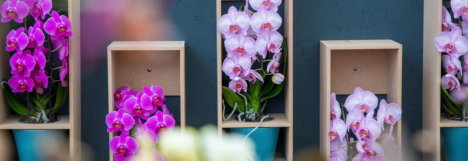Producten Original Orchids