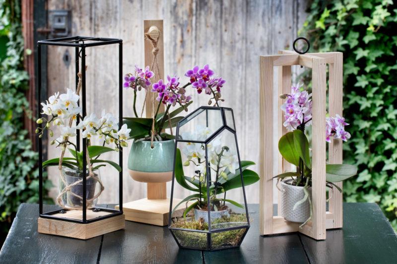 De vier nieuwe frames van de Living Collection by Artisan, met Trésor.