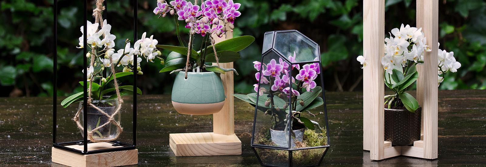 De vier nieuwe Trésor frames waarmee de Living Collection by Artisan is uitgebreid.